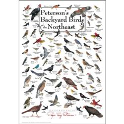 Peterson's Backyard Birds of the Northeast Birds Jigsaw Puzzle