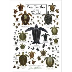Sea Turtles of the World Under The Sea Jigsaw Puzzle