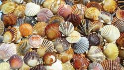 Bay Scallop Beauties Beach Jigsaw Puzzle