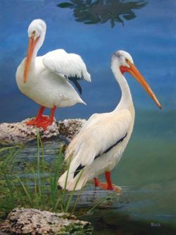 White Pelicans Birds Jigsaw Puzzle