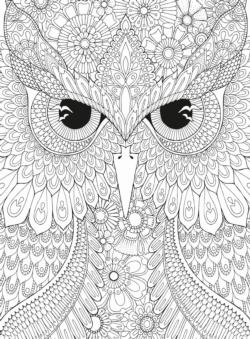 Owl Birds Coloring Puzzle