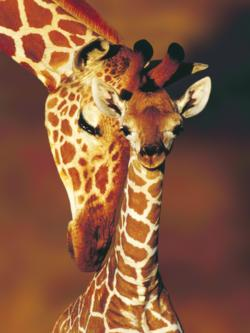 Giraffes (Animal Planet) Baby Animals Large Piece