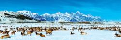 Elk Refuge National Parks Panoramic Puzzle