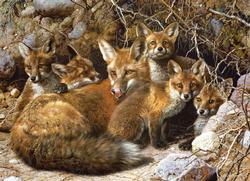 Full House Wildlife Jigsaw Puzzle