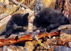 Black Bear (Animal Planet) Baby Animals Jigsaw Puzzle