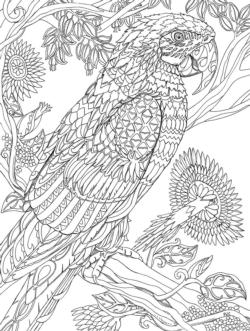 Parrot Coloring Puzzle Birds Large Piece