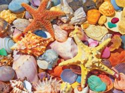 Beach Shells Nautical Jigsaw Puzzle