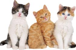 Kittens - Scratch and Dent Kittens Jigsaw Puzzle