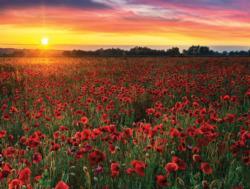 Poppy and Barley Sunrise / Sunset Jigsaw Puzzle