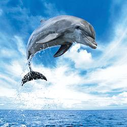 Dolphin Photography Jigsaw Puzzle