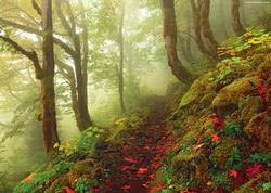 Path (Magic Forests) Outdoors Jigsaw Puzzle