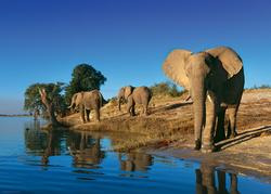 Thirsty Elephants Photography Jigsaw Puzzle