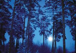 Full Moon, Magic Forest Nature Jigsaw Puzzle