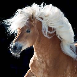 Horse (Mini) Horses Jigsaw Puzzle