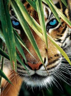 Blue Eyes Tigers Jigsaw Puzzle