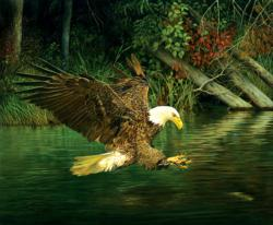 Catching Dinner Lakes / Rivers / Streams Jigsaw Puzzle