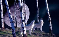 Night Call Forest Jigsaw Puzzle