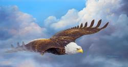 Cloud Nine - Scratch and Dent Eagles Jigsaw Puzzle