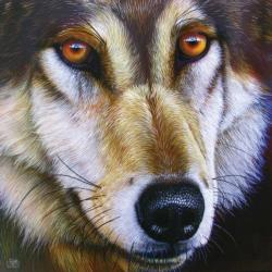 Wolf Face Wolves Jigsaw Puzzle