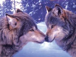 Muzzle Nuzzle Wolves Jigsaw Puzzle