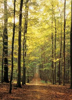 Forest Path Photography Jigsaw Puzzle