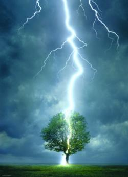 Lightning Striking Tree (Small Box) Nature