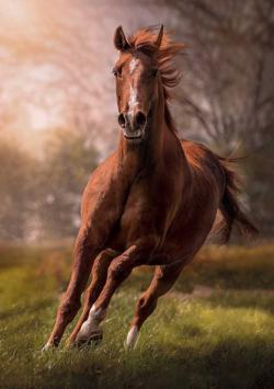 The Horse Horses Jigsaw Puzzle