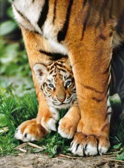Bengal Tiger Cub Between its Mother's Legs Tigers Jigsaw Puzzle