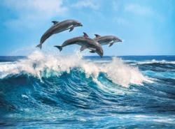 Dolphins Dolphins Jigsaw Puzzle