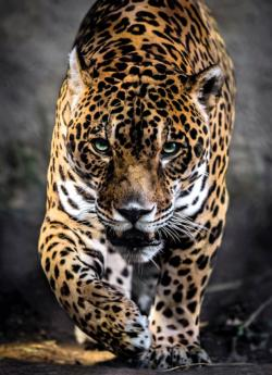 Walk of the Jaguar Photography Jigsaw Puzzle