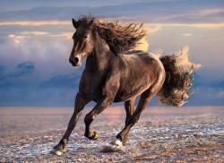 Free Horse Horses Jigsaw Puzzle