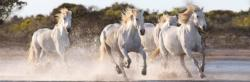 Running Horses - Scratch and Dent Horses Panoramic Puzzle