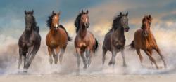 Horses Horses Panoramic Puzzle
