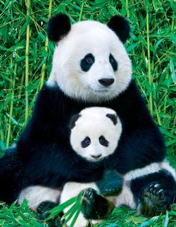 Panda & Baby (Mini) Pandas Miniature