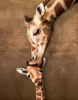 Giraffe Mother's Kiss (Mini) - Scratch and Dent Baby Animals Miniature Puzzle