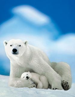 Polar Bear & Baby (Mini) Baby Animals Miniature
