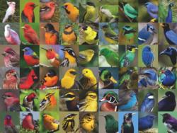 Rainbow of Birds Birds Jigsaw Puzzle