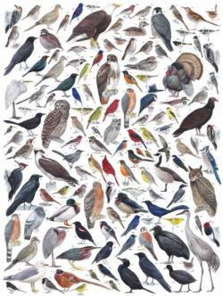 Birds of Eastern/Central North America Birds Jigsaw Puzzle