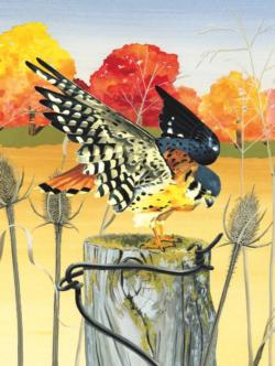 American Kestrel Birds Jigsaw Puzzle
