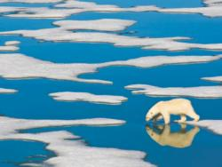 Polar Bear on Ice Photography Jigsaw Puzzle