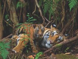 Mother Tiger and Cub Tigers Jigsaw Puzzle