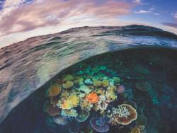 Great Barrier Reef Australia Jigsaw Puzzle