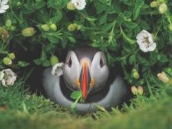 Puffin Chick Photography Jigsaw Puzzle