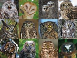 Owls and Owlets Owl Jigsaw Puzzle
