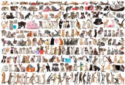 The World of Cats Pattern / Assortment 2000 and above