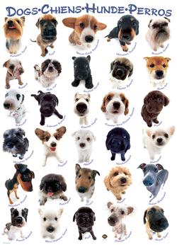 Dog Breeds Pattern / Assortment Large Piece