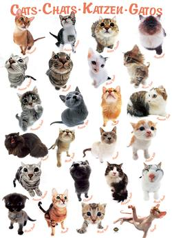 Cats Pattern / Assortment Large Piece