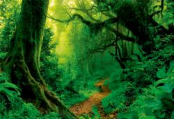 Enchanted Forest Nature Jigsaw Puzzle