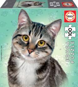 European Shorthair Cats Jigsaw Puzzle