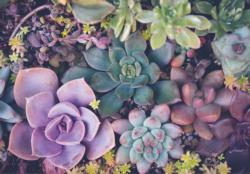 Succulents Garden Jigsaw Puzzle